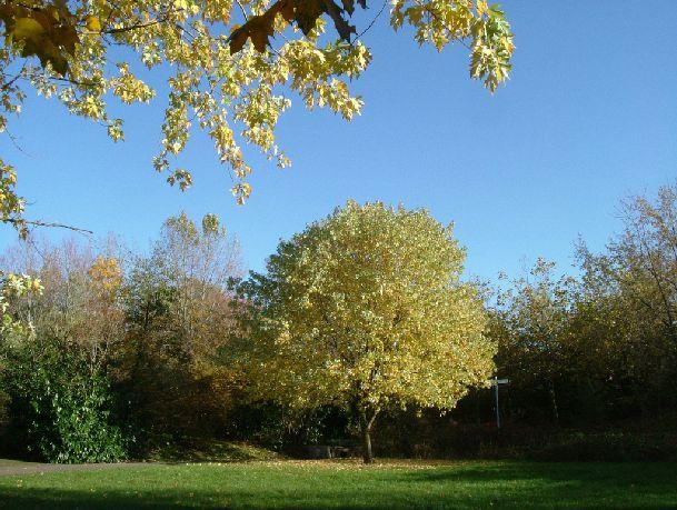 В Лондоне много прекрасных парков, в которых обязательно стоит побывать в хорошую погоду