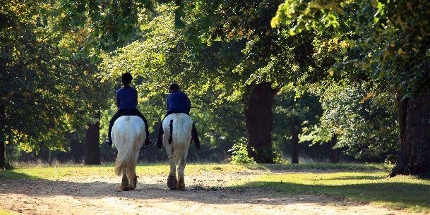 В сентябре в Гайд-Парке  можно увидеть полное разнообразие лошадей
