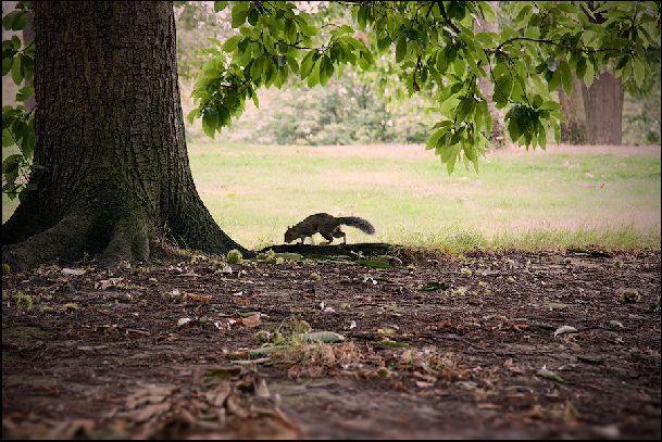 Гулять в английских парках одно удовольствие.. как видим, их полюбили не только люди!